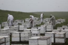 photo 6/14 - Des abeilles et des hommes - © Jour2Fête