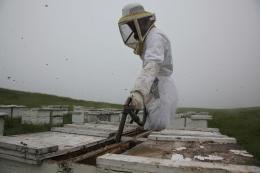 photo 5/14 - Des abeilles et des hommes - © Jour2Fête