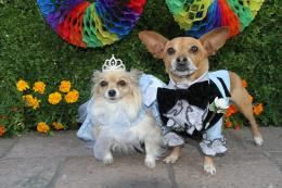 Le Chihuahua De Beverly Hills 3 photo 1 sur 4