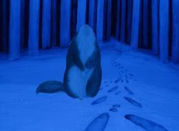 photo 1/2 - Des pas dans la neige