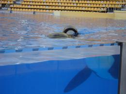 Blackfish photo 3 sur 23