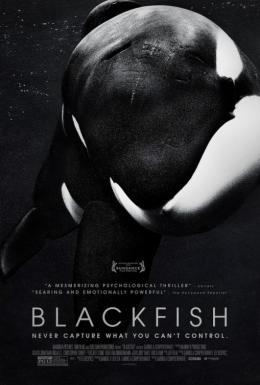 photo 21/23 - Blackfish