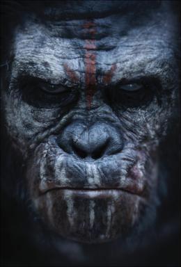 photo 47/55 - La Planète des singes : l'Affrontement - © 20th Century Fox