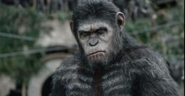 La Planète des singes : l'Affrontement photo 8 sur 55