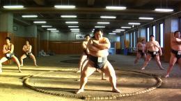 photo 3/6 - Tu seras sumo - © Aloest Distribution