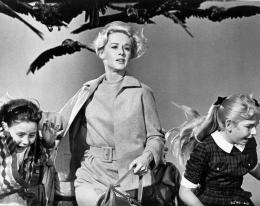 photo 2/8 - Tippi Hedren - Les Oiseaux - © Universal Pictures