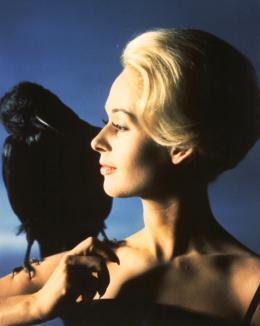 photo 4/8 - Tippi Hedren - Les Oiseaux - © Universal Pictures