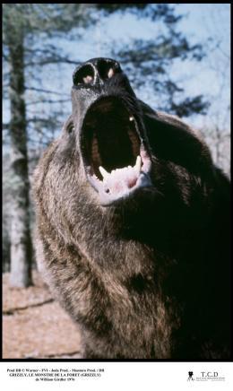 photo 6/10 - Grizzly, le monstre de la forêt - © Filmedia