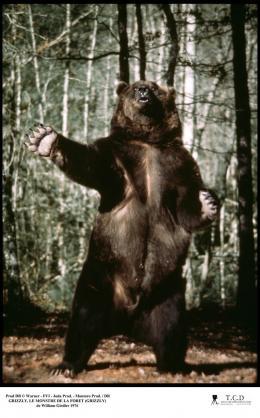photo 5/10 - Grizzly, le monstre de la forêt - © Filmedia