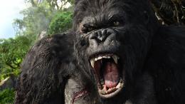 photo 18/360 - King Kong