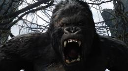 photo 15/360 - King Kong