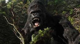 photo 12/360 - King Kong