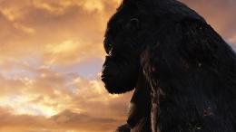 King Kong photo 10 sur 360