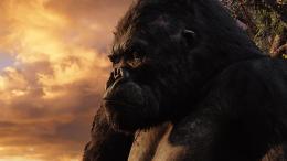 photo 57/360 - King Kong
