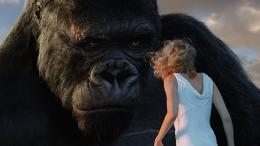photo 71/360 - King Kong