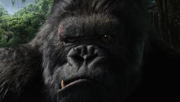 photo 84/360 - King Kong