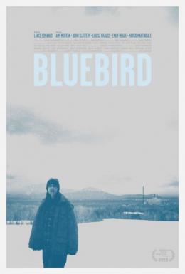 photo 1/1 - Bluebird