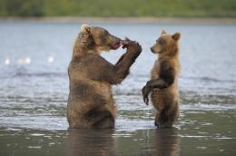 photo 15/20 - Terre des Ours - © Igor Shpilenok pour Paramount