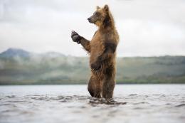 photo 13/20 - Terre des Ours - © Sergey Gorshkov pour Paramount