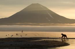 photo 18/20 - Terre des Ours - © Igor Shpilenok pour Paramount