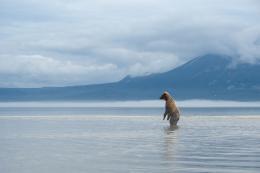 photo 11/20 - Terre des Ours - © Sergey Gorshkov pour Paramount