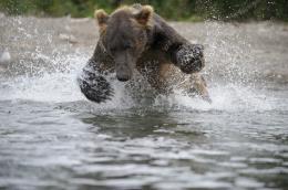 photo 16/20 - Terre des Ours - © Igor Shpilenok pour Paramount