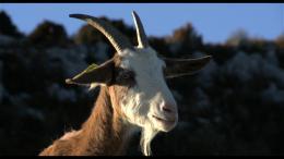 Les Chèvres de ma Mère photo 2 sur 9