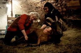 Les Chèvres de ma Mère photo 4 sur 9