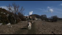 Les Chèvres de ma Mère photo 5 sur 9