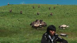 Le Rappel des Oiseaux photo 2 sur 5