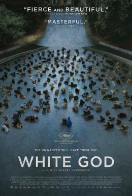 photo 18/18 - White God