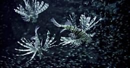 photo 12/20 - Nature - © Metropolitan FilmExport