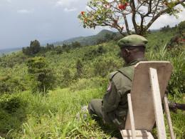 photo 34/38 - Virunga