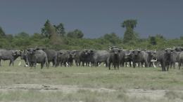 photo 27/38 - Virunga - © Netflix