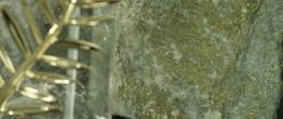 photo 21/42 - La Légende de la Palme d'or