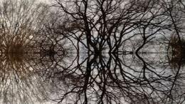 Poétique du Cerveau photo 3 sur 14