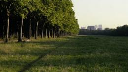 Le Bois dont les Rêves sont faits photo 1 sur 12