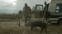 photo 1/1 - Mr. Pig