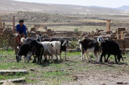 Timgad photo 5 sur 25