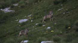 photo 6/12 - La Vallée des Loups - © Pathé Distribution