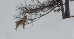 photo 2/12 - La Vallée des Loups - © Pathé Distribution