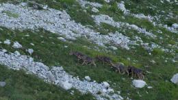 photo 8/12 - La Vallée des Loups - © Pathé Distribution