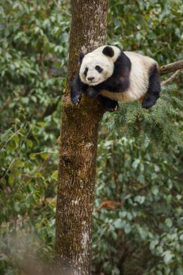 photo 15/40 - Nés en Chine - © Walt Disney Pictures