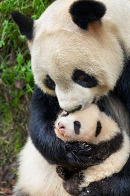 photo 30/40 - Nés en Chine - © Walt Disney Pictures