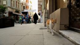 photo 5/12 - Kedi, des Chats et des Hommes - © Epicentre Films