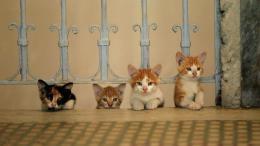 Kedi, des Chats et des Hommes photo 7 sur 12