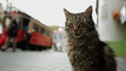 Kedi, des Chats et des Hommes photo 10 sur 12