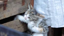 Kedi, des Chats et des Hommes photo 2 sur 12