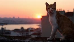 Kedi, des Chats et des Hommes photo 1 sur 12
