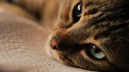 Kedi, des Chats et des Hommes photo 4 sur 12